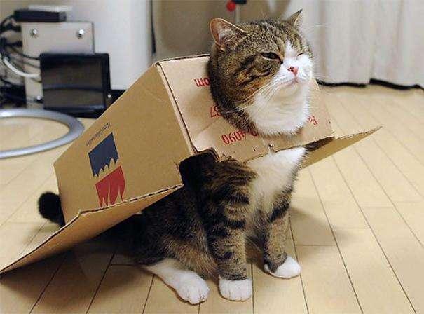 Besplatni videozapisi s mačkicama