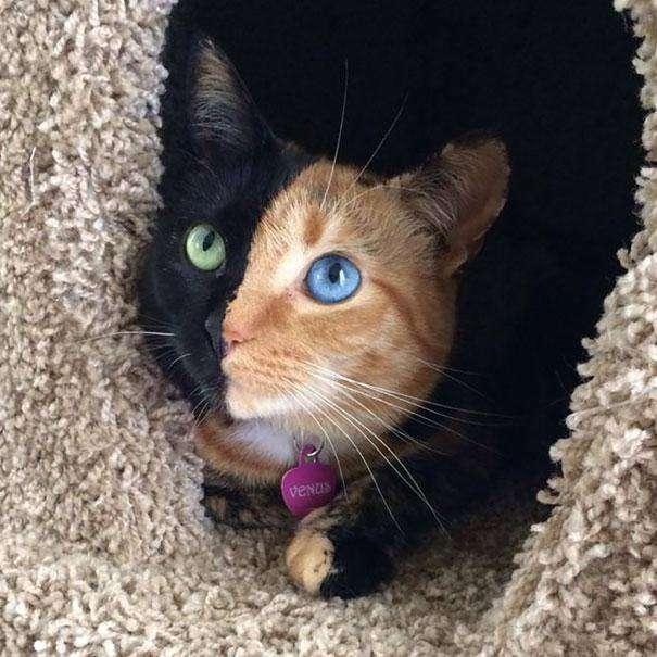 Amaterski, Fetiš, stvarnost, ženska Vruća ljepotica gleda joj maca.